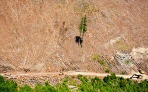 2 Bäume stehen auf einer sonst kahlgeschlagenen Fläche.