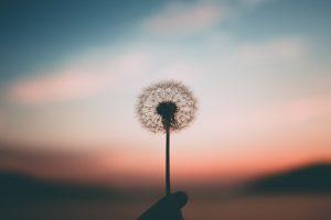 Blick auf eine Blume im Wind