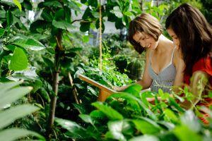 Besucher lesen ein Informationsschild im Regenwald des Tropical Islands